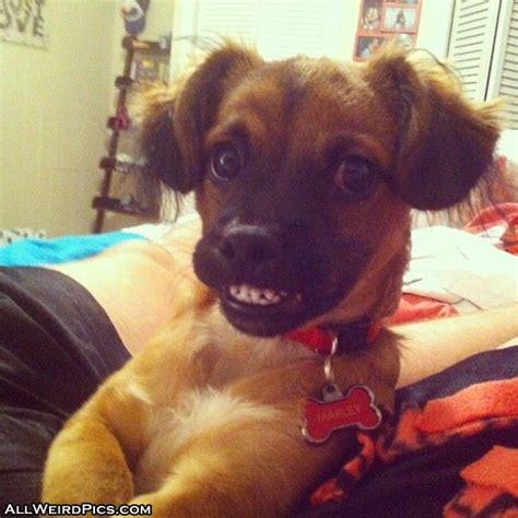 Smiling Dog Meme - smiling dog blank template imgflip