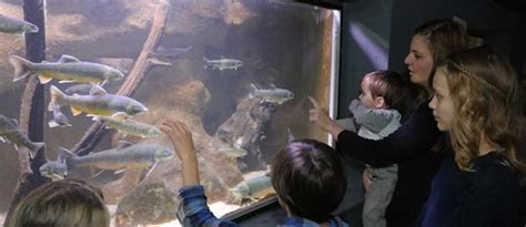 en bref l aquarium du lac du bourget