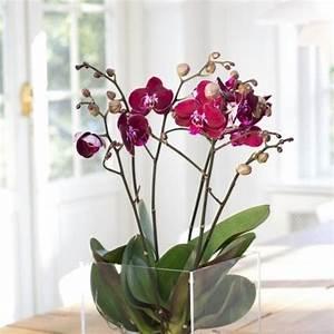 Orchideen Ohne Topf : die besten 25 blumenkasten fensterbank ideen auf pinterest blumenkasten deko weihnachten ~ Eleganceandgraceweddings.com Haus und Dekorationen