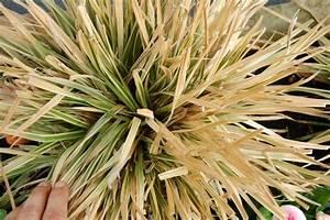 Wann Schneidet Man Gräser : gr ser schneiden pflanzen f r nassen boden ~ Frokenaadalensverden.com Haus und Dekorationen