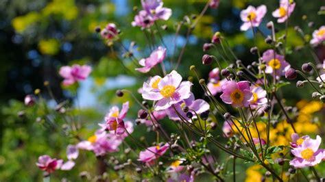 Herbst Blume Im Garten auch im herbst sorgen blumen f 252 r farbe im garten