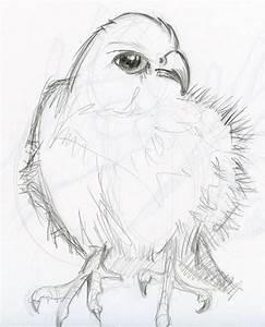 Pencil sketch: Animals by phebron on DeviantArt