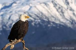 matted photo album scenic bald eagle and mountain background