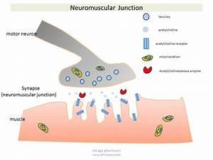 Key To Understanding Neurotoxicity Of Snake  U0026 Spider