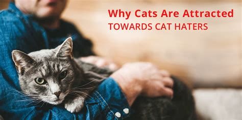 cat haters cats why attracted towards