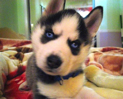 25 best dogs that don t shed images on pinterest animals