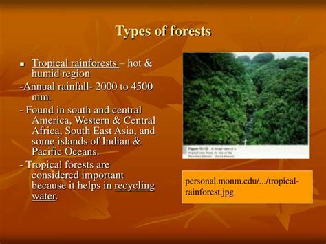 PRESENTATION ON FOREST ECOSYSTEM PowerPoint