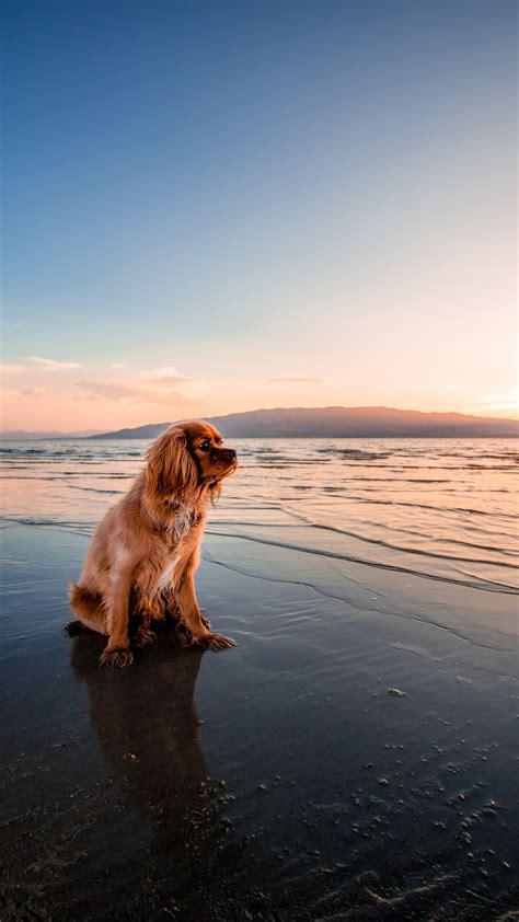 wallpaper dog dusk beach seashore hd  animals