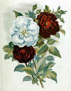 Free Antique Book Illustration of Red and White Country ...