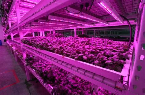 indoor farming led lights green sense farms indoor farm
