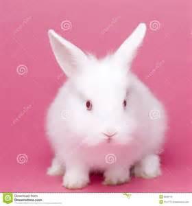 Cute White Baby Rabbits