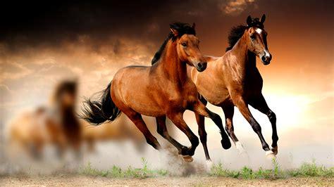 top 15 hình nền ngựa đẹp cho máy tính