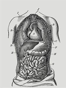 U0026quot Human Digestive System Diagram U0026quot  T