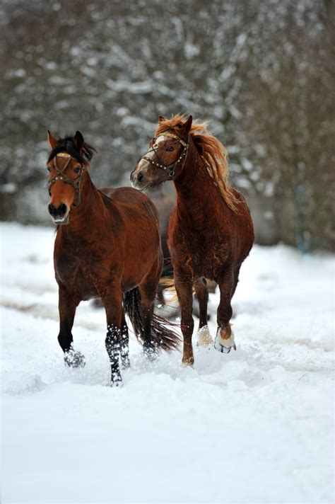 tips winterize  barn   horses healthy