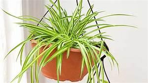 Pflanzen Für Innen : h ngepflanzen in der blumenampel das muss man beachten ~ Michelbontemps.com Haus und Dekorationen