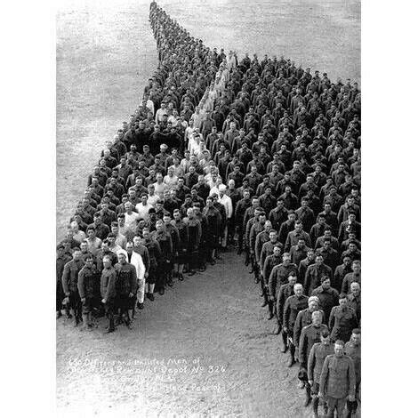 anzac horses horse