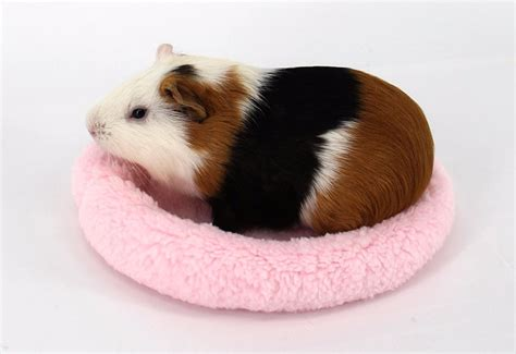 guinea pig bedding bulk fleece guinea pig beds winter warm rabbit hamster mat