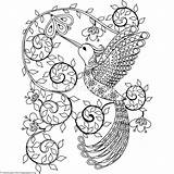 Hummingbird Coloring Zentangle Pages Getcoloringpages sketch template