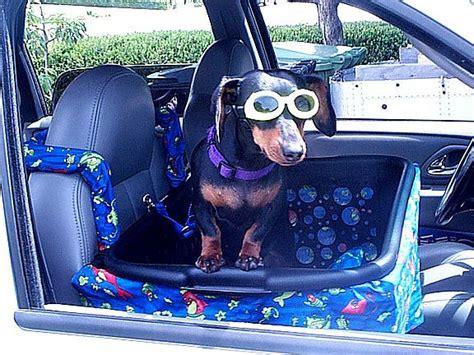 Diy Front Seat Dog Car Seat