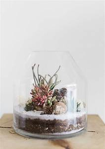 how to make and care for a succulent terrarium martha