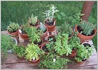 potted herb garden Garden of Steph: Container Herb Gardens