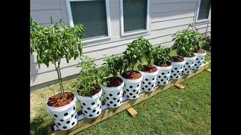 Recycled Bucket Gardening (container Gardening For