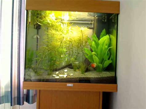 My Juwel Lido Aquarium Youtube