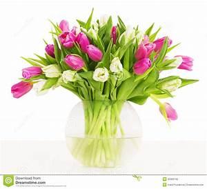 Tulpen In Vase : tulpen bl ht blumenstrau im vase wei er hintergrund stockfoto bild von leerzeichen gruppe ~ Orissabook.com Haus und Dekorationen