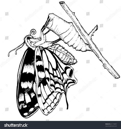 Butterfly Cocoon เวกเตอร์สต็อก 41176957 - Shutterstock
