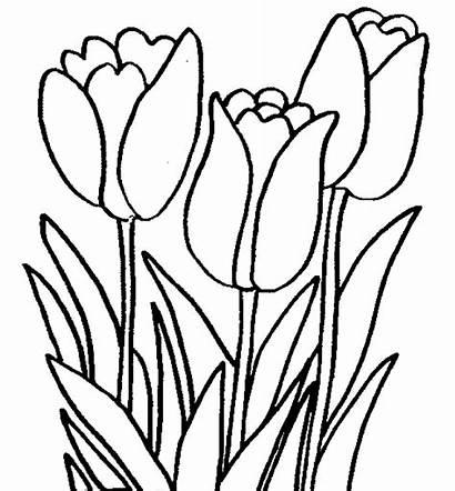 Bunga Tulip Gambar Untuk Printemps Mewarnai Coloriage
