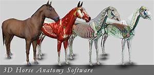 3d Horse Anatomy Software Apps On Google Play