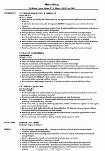 Professional Talent Acquisition Resume Examples Vp  Talent