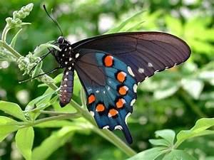 Rare Butterflies of the World | Butterflies | Pinterest