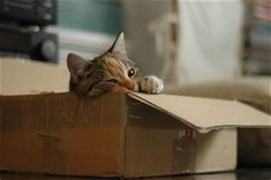 Mit Katze Umziehen : umzug mit katzen tipps f r das umziehen jobruf ~ Michelbontemps.com Haus und Dekorationen