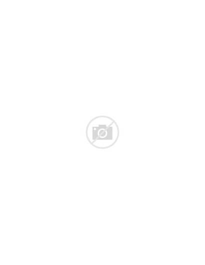 Coon Maine Profile Kitten Vector Illustration Animal