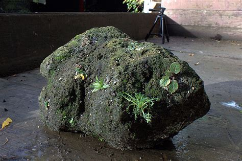 pumice for gardening planting of a pumice block forum topic american