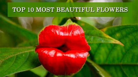 💐 TOP 10 MOST BEAUTIFUL FLOWERS IN THE WORLD! - YouTube