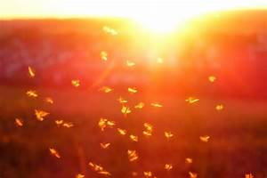 Was Mögen Mücken Nicht : insekten und licht auf die richtige leuchte kommt es an prediger lichtjournal ~ Frokenaadalensverden.com Haus und Dekorationen
