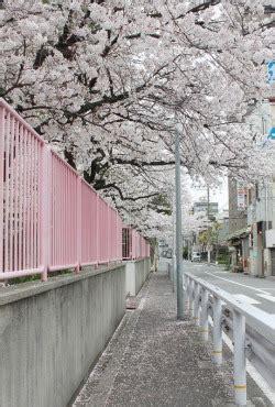 photography lights anime japan kawaii beautiful street