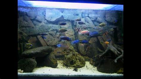 150 liters to gallons envirobro s malawi cichlid aquarium 150 gallons 600 liters