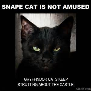 harry potter cat 15 harry potter characters portrayed by cats babble