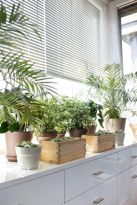 Window Ledge Plants by Fensterbank Deko Die Farben Der Natur Durch Pflanzen