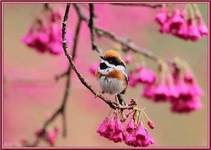 Spring Bird Animated Gifs Birds Animals Lovethispic