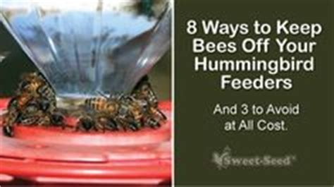 here are tips for keeping ants wasps bees out of