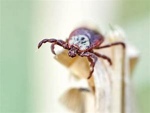 the u s and the lyme disease epidemic easy