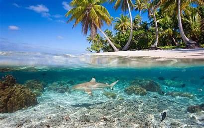 Tropical Underwater Island Islands Palm Shark Trees