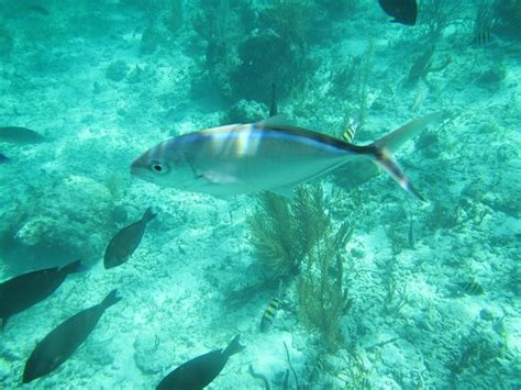 Glass Bottom Boat Cayo Coco by Glass Bottom Boat Cayo Coco All You Need To