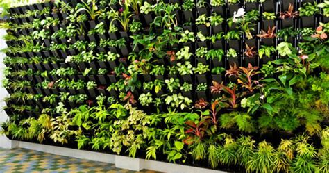 Plants Used In Vertical Gardens by Vertical Garden View Specifications Details Of