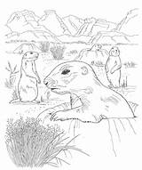 Coloring Desert Printable Animals Printables Sheet Adults Popular Template Coloringhome sketch template
