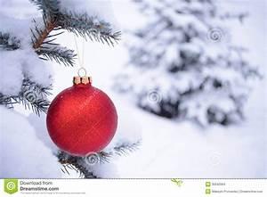 Le Sapin A Les Boules : belle boule rouge de no l sur la branche de sapin couverte de neige photo stock image 35042064 ~ Preciouscoupons.com Idées de Décoration